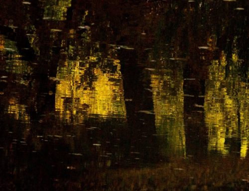 Tomando copas con Gustav Klimt